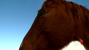 Horse rescue group could see busiest year if economy doesn't rebound