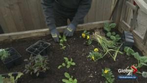Gardenworks: Flower Bed Planting
