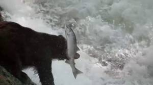 New film draws attention to Great Bear Rainforest