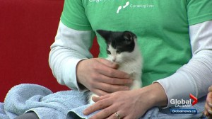 Calgary Humane Society Pet of the Week: Michael Jackson