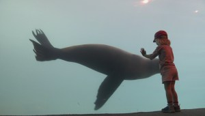 Vancouver Aquarium unveils new seal lion exhibit