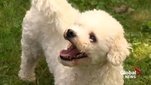 Upcoming changes to Nova Scotia's Animal Protection Act has dog lovers divided