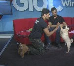Winnipeg Animal Services looking for 'furever' home for 2 dogs in love