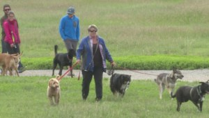 Calgary to consider limits on how many dogs can be let loose at once