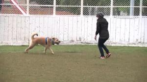 Edmonton considers converting outdoor rinks into dog parks in summer
