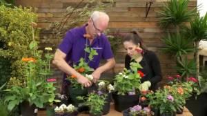 GardenWorks: Pollinator Plants