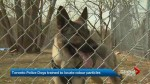 Toronto police dogs trained to locate odour particles