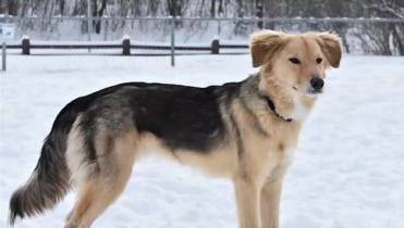 Couple holds out hope for dog that escaped from Kingston