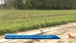 Ontario nursery warns millions of seedlings at risk of being destroyed because of government cuts