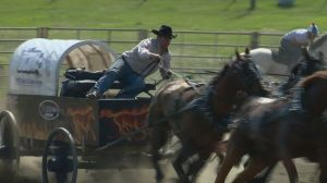 A passion for chuckwagon racing