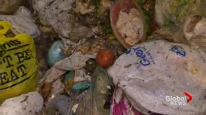 Face-to-face with food waste in Toronto