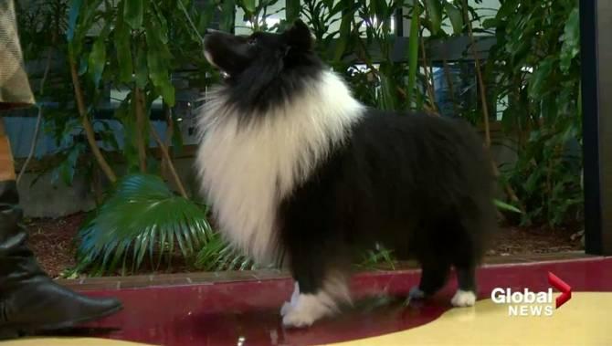 New Brunswick Kennel Club Dog Show