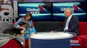 Alberta woman speaks about her dog being honoured for saving her life