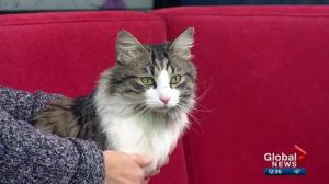 Calgary Animal Services Pet of the Week: Captain Wiggle Pants