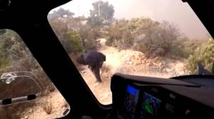 Dramatic helicopter rescue of man and dog during California wildfires