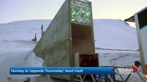 Global seed vault undergoing renovations to deal with climate change