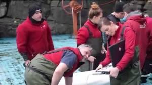 Vancouver Aquarium to provide beluga update