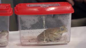 Frog Advocate and Conservationist Matt Ellerbeck visits The Morning Show