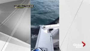 Close encounter with Great White shark off New Jersey coast