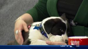 Second Chance Animal Rescue Society stops by with 2 pups