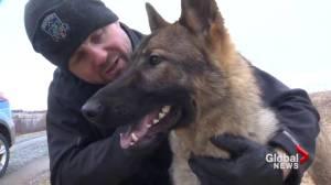 Nova Scotia town sponsors police dog, names it after fallen soldier (01:35)