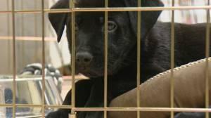 Alberta animal shelter seeks donations amid economic downturn (00:47)