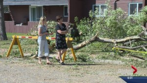 Storm in North Battleford, Sask. knocks down trees, floods streets