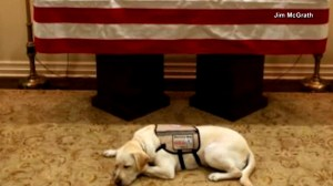 What's next for Sully, George H.W. Bush's service dog whose photo became viral