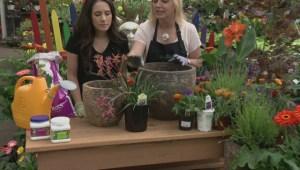 Gardenworks: Summer Planters