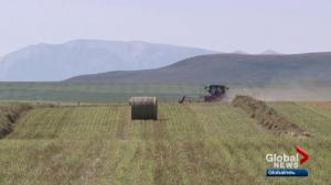 Kenney promises to replace Alberta farm safety bill