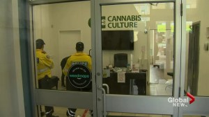 5 suspects swept up in marijuana dispensary raids released on bail