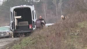 BC SPCA executes search warrant on north Okanagan ranch