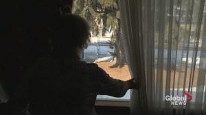 'It's dangerous': Elderly Calgary woman wants city to chop down troublesome tree