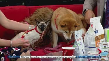 Grain-free dog food may be linked to heart disease, FDA