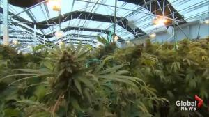 CBS investigation finds cannabis legalization yielding big cash windfalls for local communities