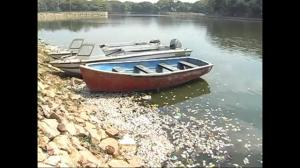 Thousands of dead fish wash up on banks of lake in India