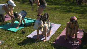 'They're so cuddly!': Calgary kids enjoy yoga with baby goats