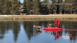 Red-suited man on a sleigh pushes deer to safety on frozen pond