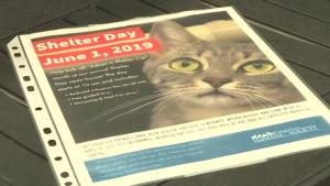 Shelter Day at Kingston Humane Society