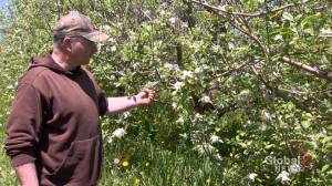 N.S. Agricultural sector hoping weather help yield crops this summer
