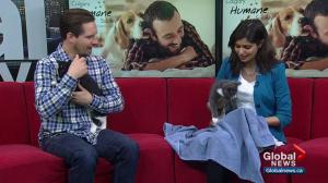 Calgary Humane Society Pet of the Week: Mary and Olivia