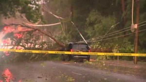 Powerful storm knocks down trees, power lines in GTA