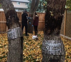 Regina entrepreneurs create new tree banding system