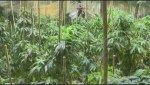 Cannabis training coming to Okanagan College