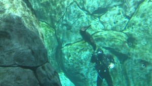 Assiniboine Park Zoo shows off 10-month-old harbour seals