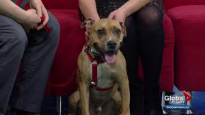 Pet of the Week: Buddy