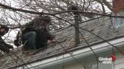Play video: Nova Scotians push to patch up roofs after nasty storm