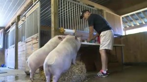 Port Perry Sanctuary gives animals new lease on life