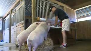 Port Perry Sanctuary gives animals new lease on life (01:56)