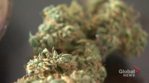 Regina taking different approach to pot licences compared to Saskatoon